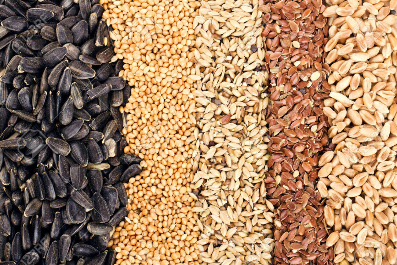 O Poder das Folhas | Numa noite de lua crescente ou cheia, prepare a seguinte mistura: - 1kg farinha de mandioca - 1 punhado de arroz com casca cru; - 1 punhado de...