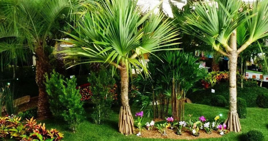 O Poder das Folhas | Acesse e conheça 10 plantas poderosas para purificar as energias da sua casa com o poder das folhas sagradas