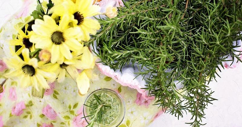 05 Plantas para Atrair Boas Energias